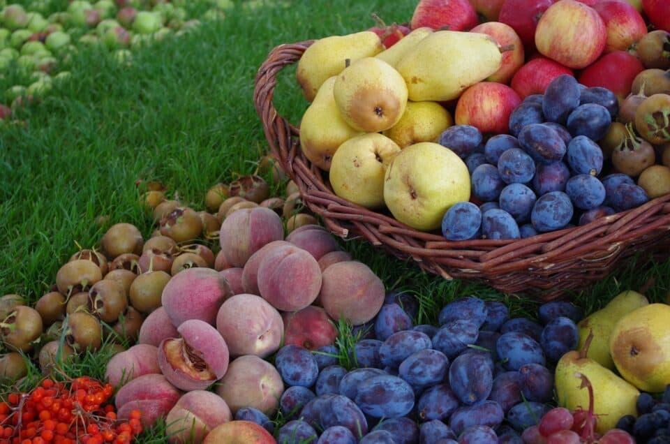 fruits 4174399 1920Bild von Marcus Wirth auf Pixabay e1625325331521