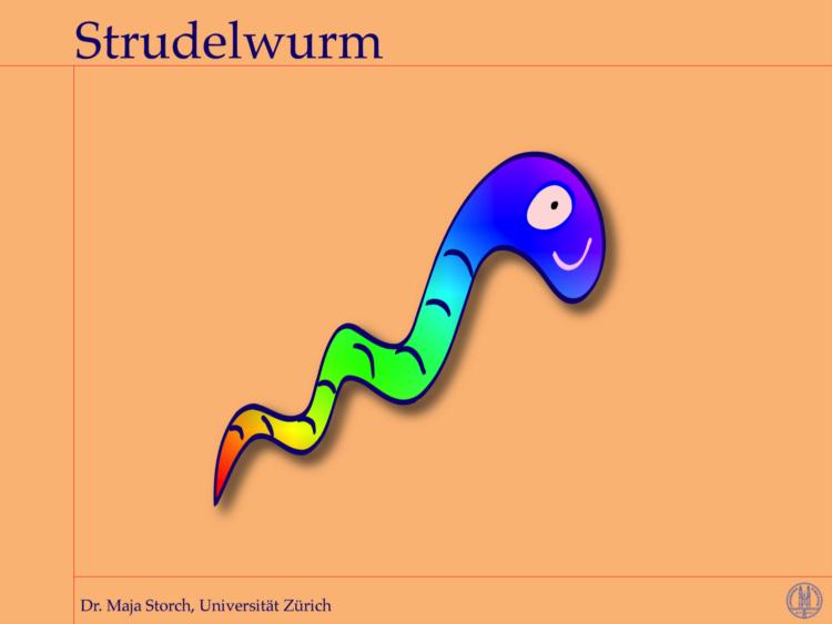 wurmbild strudelwurm e1630130444502